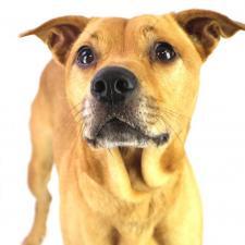 Main photo of Baxter