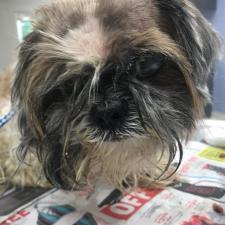 Lost & Found   Jacksonville Humane Society