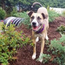 Available Pets - Anicira Veterinary Center - Harrisonburg
