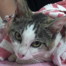 Adopt – Harbor Humane Society