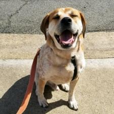 Dogs for Adoption « Homeward Trails Animal Rescue | Pet
