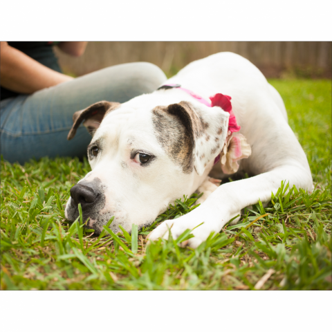https://www.shelterluv.com/sites/default/files/styles/large/public/animal_pics/464/2017/04/09/22/20170409220046.png?itok=yIifB6n0