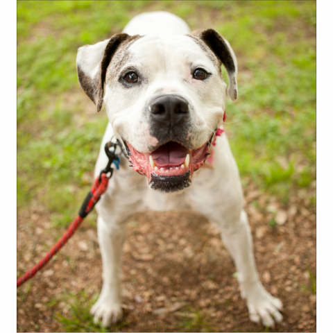 https://www.shelterluv.com/sites/default/files/styles/large/public/animal_pics/464/2017/04/09/22/20170409220221.png?itok=s_N7R6p6