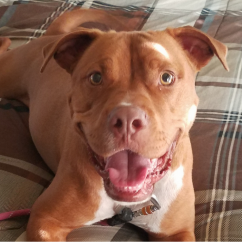 https://www.shelterluv.com/sites/default/files/styles/large/public/animal_pics/464/2017/06/18/07/20170618074248_0.png?itok=4T8uUY6P