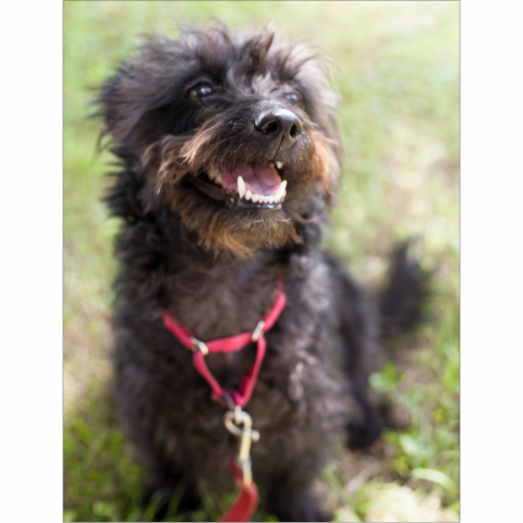 https://www.shelterluv.com/sites/default/files/styles/large/public/animal_pics/464/2017/06/22/09/20170622090945.png?itok=YW6sWodF