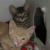 https://www.shelterluv.com/sites/default/files/styles/large/public/animal_pics/464/2017/07/11/08/20170711085837.png?itok=EchlFLPu