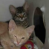 https://www.shelterluv.com/sites/default/files/styles/large/public/animal_pics/464/2017/07/11/09/20170711090355.png?itok=p737DLD8