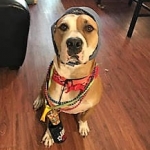 https://www.shelterluv.com/sites/default/files/styles/large/public/animal_pics/464/2017/08/09/21/20170706085337_0.png?itok=YT2ZnfF2