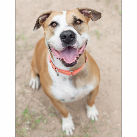 https://www.shelterluv.com/sites/default/files/styles/large/public/animal_pics/464/2017/08/25/09/20170825093321.png?itok=NHJh4ixX