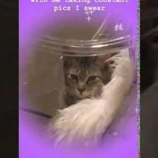 https://www.shelterluv.com/sites/default/files/styles/video_thumb/public/youtube/PkVMjGpeWx0.jpg?itok=JtpGpOw3